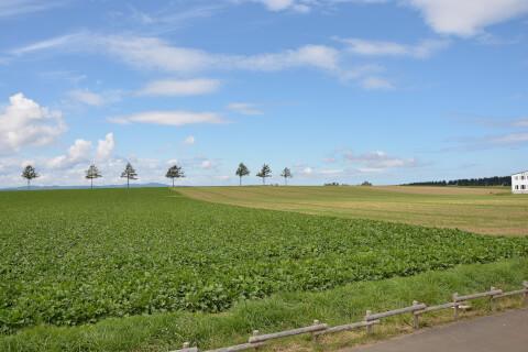 北海道 自然 草原
