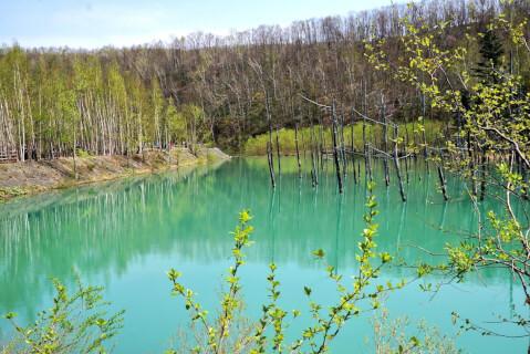 白金青い池1