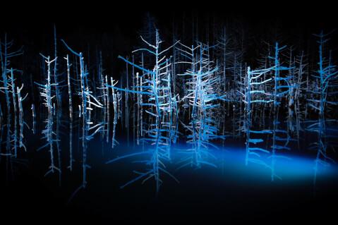 日本 絶景 北海道 青い池 冬 ライトアップ