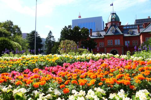 Hokkaido_Docho