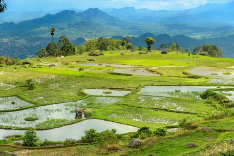 インドネシアのおすすめ観光スポット、タナトラジャ
