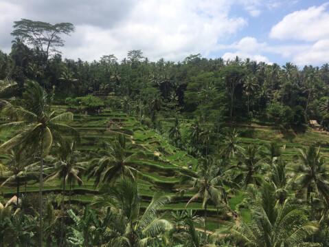 ウブド_インドネシア