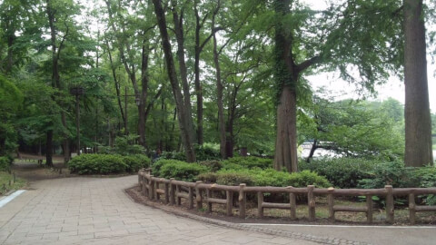 井の頭恩賜公園 緑地