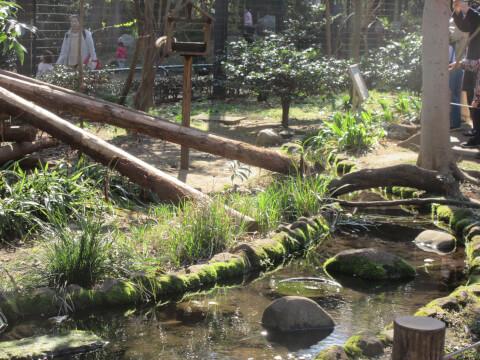 リスの小径 森