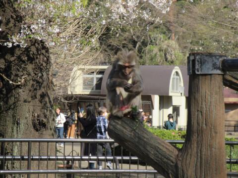 猿山 自然文化園