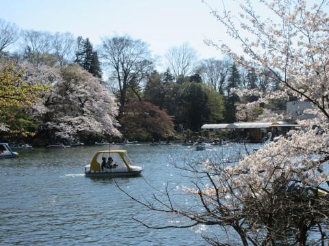井の頭恩賜公園 ボート