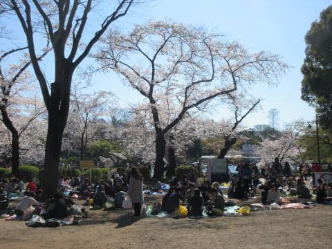 井の頭恩賜公園 花見