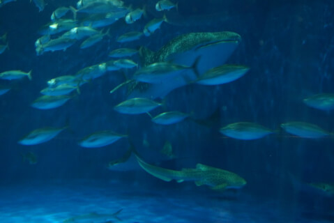 いおワールドかごしま水族館 黒潮