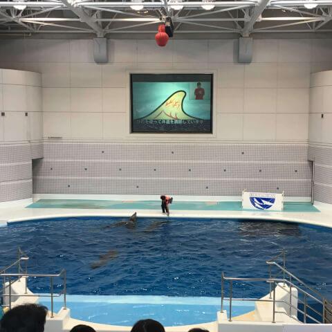 いおワールドかごしま水族館 イルカショー