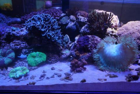 colorfulfish