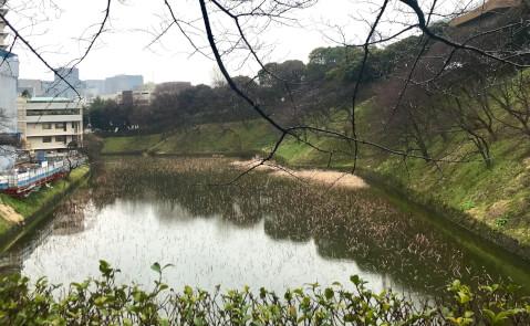 日本武道館_牛ヶ淵