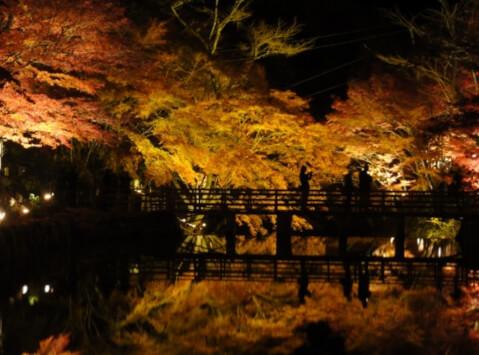 岩谷堂公園 ライトアップ
