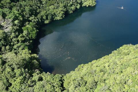 マカラカル島 パラオ ジェリーフィッシュレイク