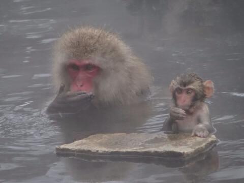 温泉サル1