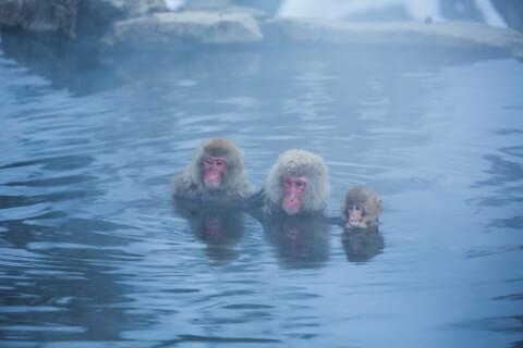 温泉サル2