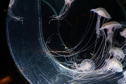 鹿児島水族館 クラゲ