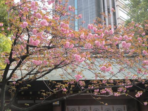 東京大神宮 景色