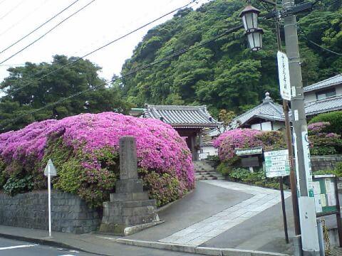 安養院_鎌倉_観光_旅_名所_神社_食べ歩き_景色