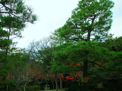 鎌倉大仏 松