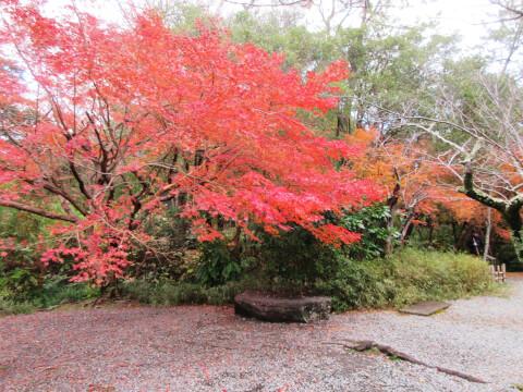 鎌倉 紅葉