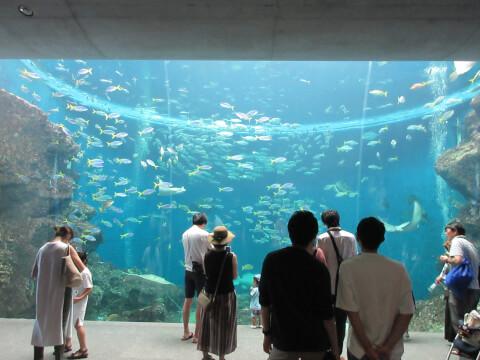 水族館 大水槽
