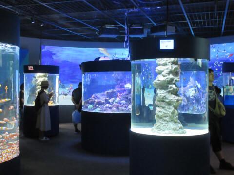 水族館 ニモ