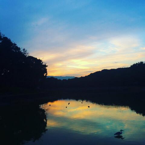 橿原神宮深田池