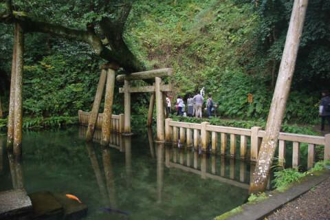 御手洗いの池 鹿島神宮