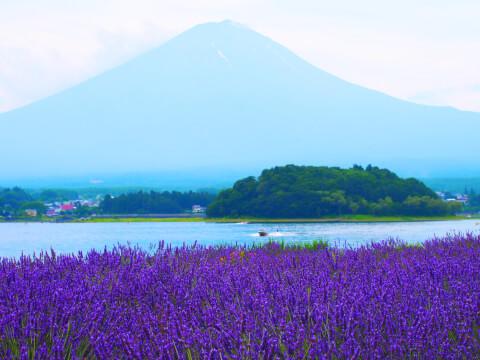 日本 絶景 河口湖 大石公園 ラベンダー