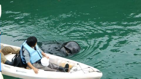 kayak_whale