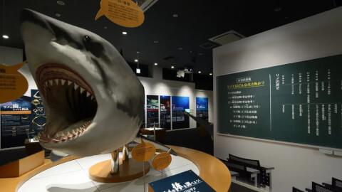 気仙沼 観光 シャークミュージアム