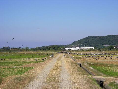 鹿児島観光出水市