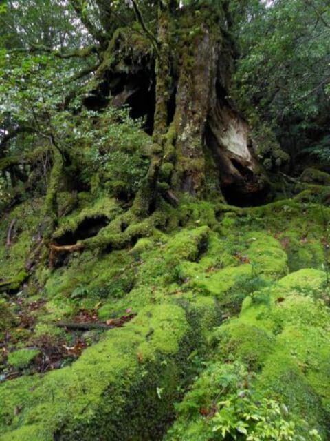 鹿児島観光白谷雲水峡