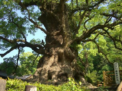 鹿児島観光蒲生八幡神社