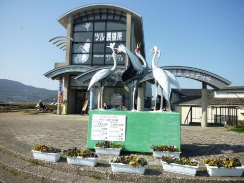 鹿児島観光鶴