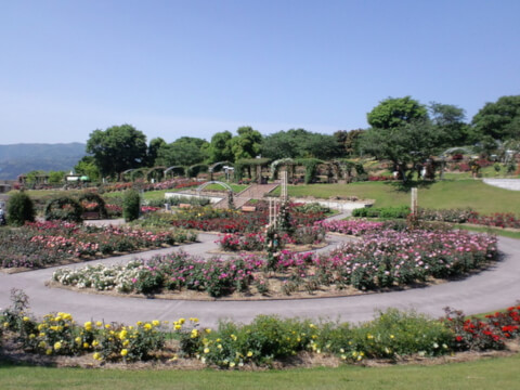 鹿児島観光かのやばら園