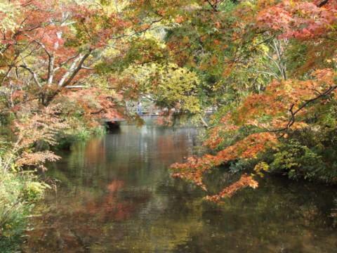 紅葉 金鱗湖の遊歩道