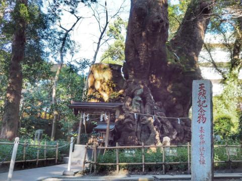 静岡観光来宮神社