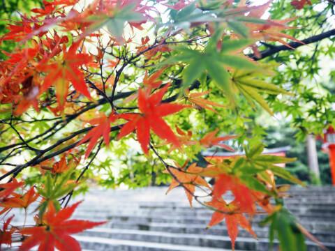 霧島神宮 紅葉