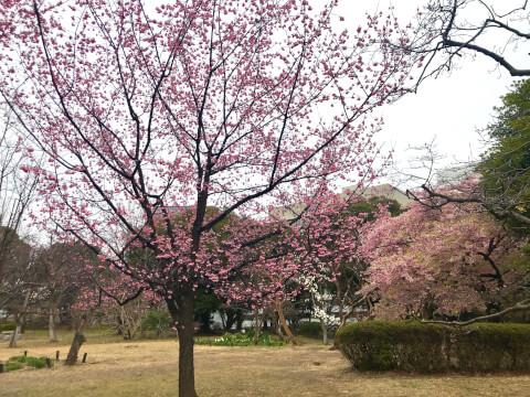 北の丸公園_日本武道館