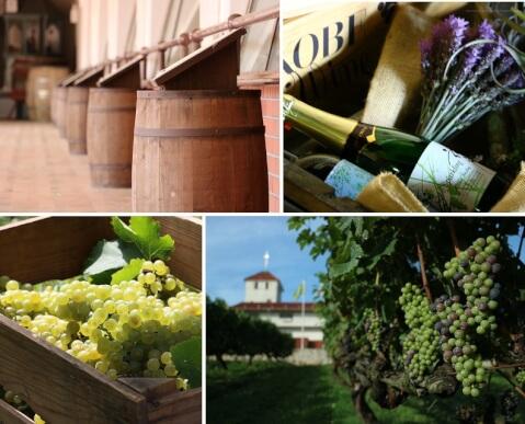神戸 観光 デート 旅行 ワイン ワイナリー