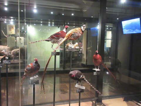 鳥 国立科学