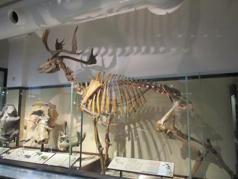 骨 国立科学博物館