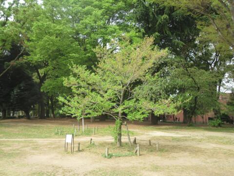 上野恩賜公園 木々