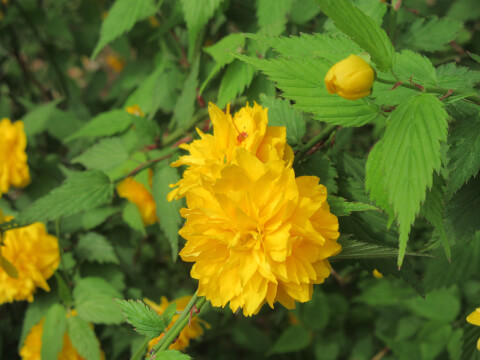 上野恩賜公園 花