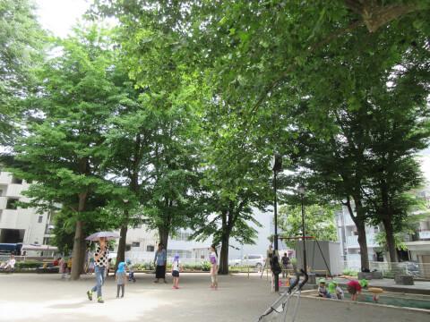高円寺中央公園 自然