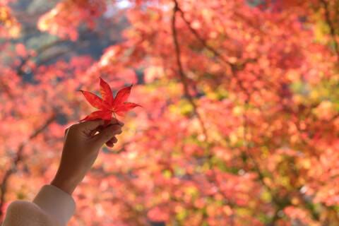 日本 絶景 愛知 香嵐渓 紅葉