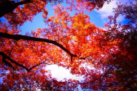 亀山公園_嵐山_京都_観光_グルメ_食べ歩き_旅行_旅_絶景_神社