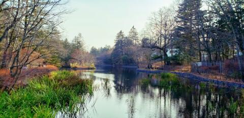 雲場池 緑