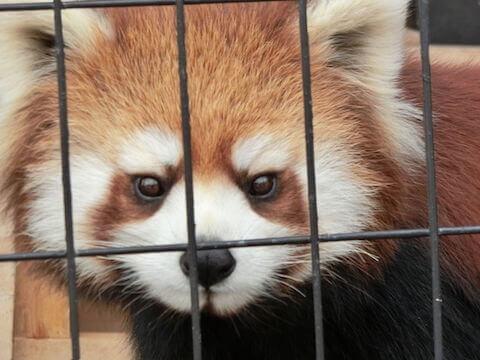 釧路市立動物園